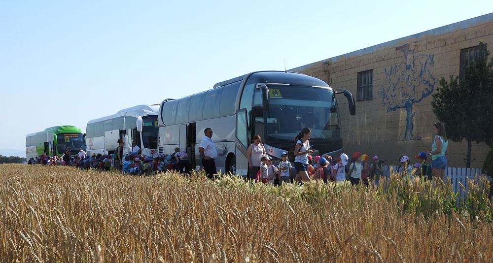 Llegada de autobuses a la granja